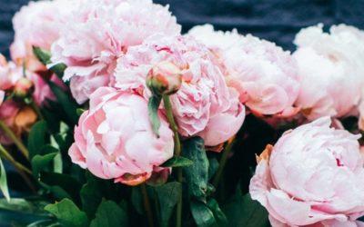 Study Floristry