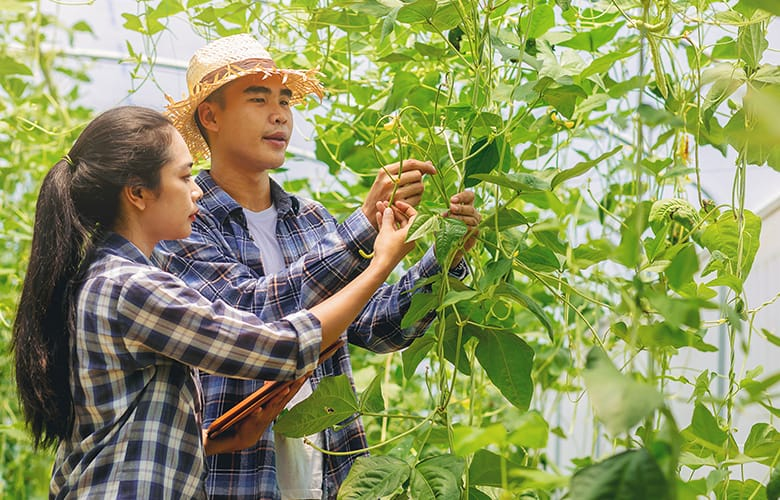 The New Agricultural Visa for South East Asian Countries